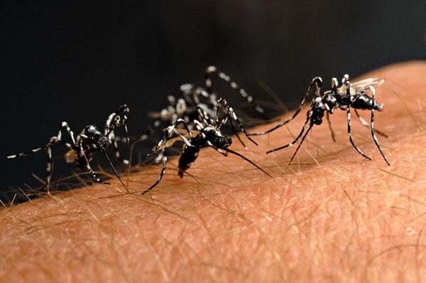 eco-roma-disinfestazioni-zanzara-tigre